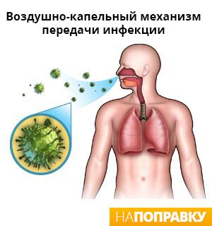 возможный путь передачи пневмонии